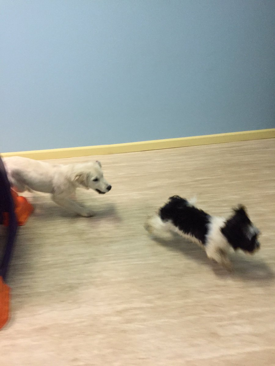 Bijou and Breslin love to run