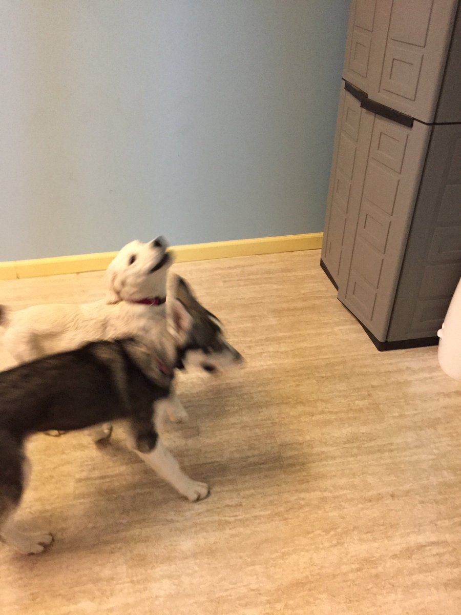 Lyka and Breslin do a little dance