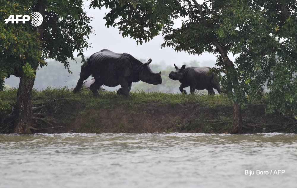 September 22 is #WorldRhinoDay! Conservationists and wildlife enthusiasts celebrate the majestic (and sadly, endangered) ungulates