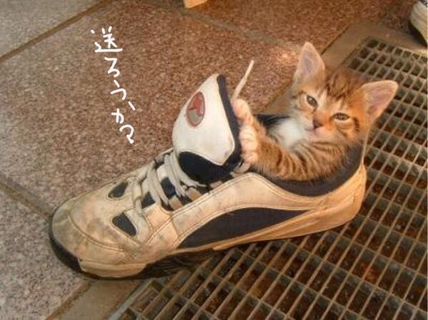test ツイッターメディア - 送ってほしかったらRT https://t.co/0ZoM8UWrDw #猫 #猫画像