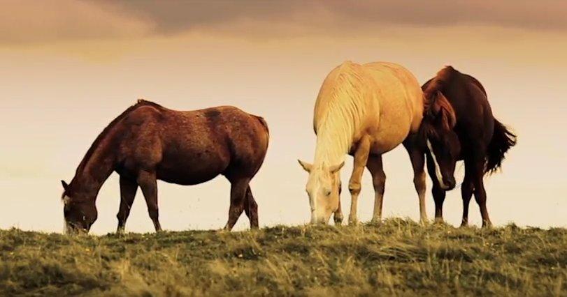 Lucas Ciliberti - Wild Horses 2017  https:// youtu.be/bph1HbpAsgk  &nbsp;   #watch #share #mustangs #wildhorses #musicblogger<br>http://pic.twitter.com/XhsEWUvVVu