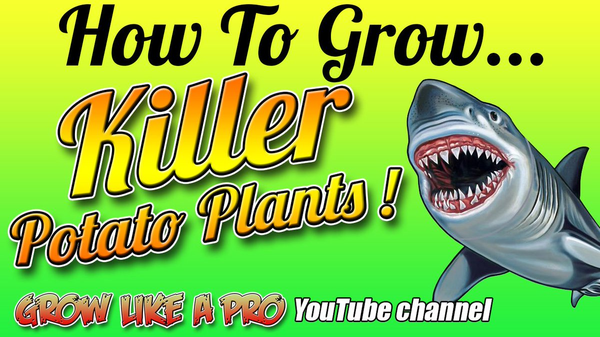 How To Grow Killer Potato Plants From Potatoes ! FULL VIDEO:  https:// youtu.be/V-bAsU5lnpk  &nbsp;   @YouTube #potatoes #gardening <br>http://pic.twitter.com/fta0QTKTQ2