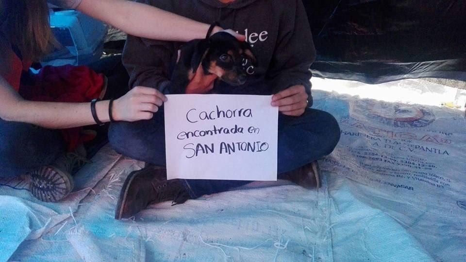 Estos lomitos y gatitos están en el refugio del Parque México. Ojalá encontremos a sus dueños. (1/2) https://t.co/E566KpcFfn