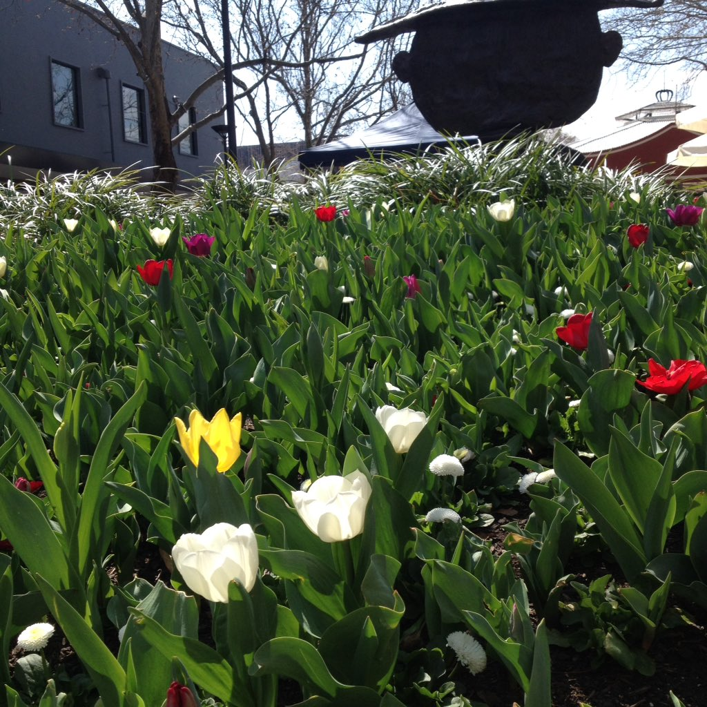 Thank you for the tulips! New flowers in Petrie Plaza #civic #canberra #cbr<br>http://pic.twitter.com/2QcYznNwlw