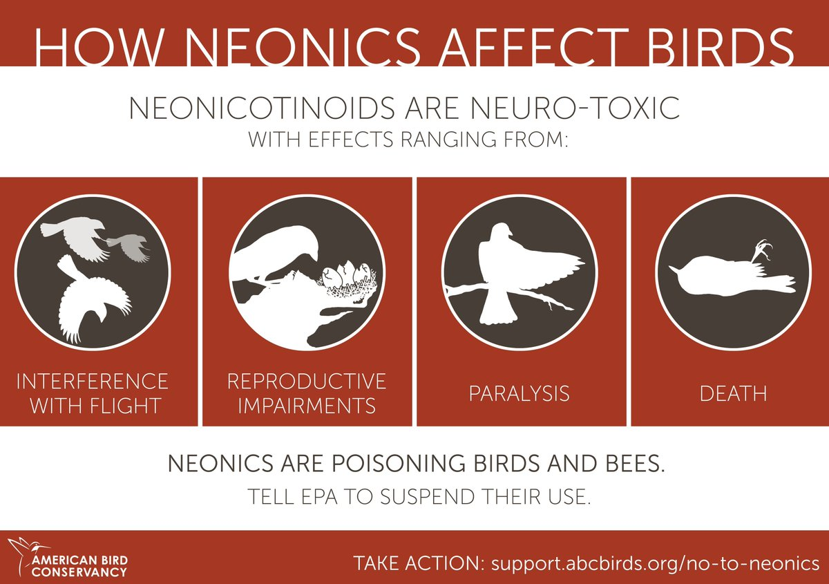 Here&#39;s how #neonics affect #birds. Want to help? Learn more:  https:// buff.ly/2fgMkPr  &nbsp;  <br>http://pic.twitter.com/ok6VSvbWcT