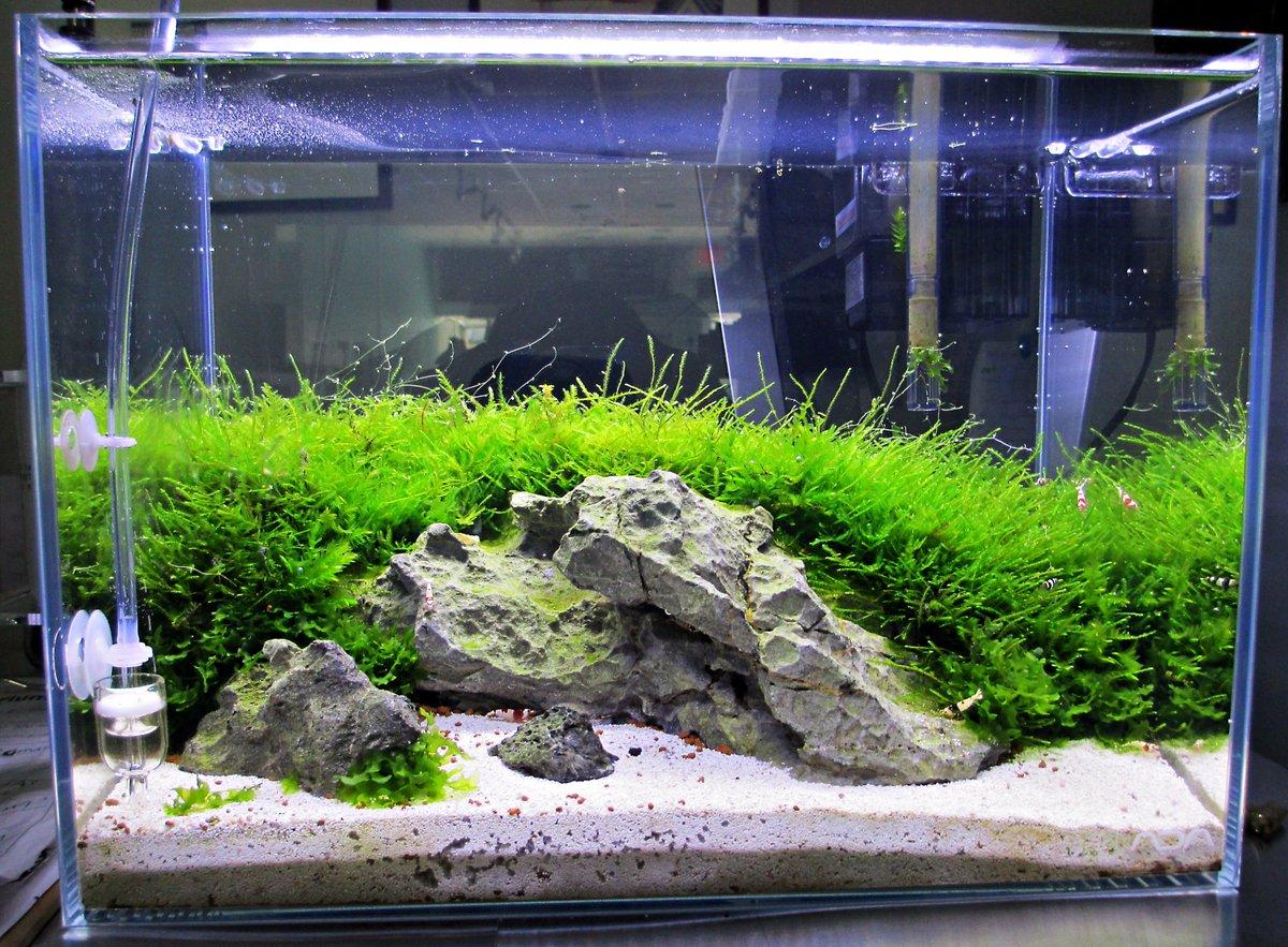 Glosso Factory On Twitter Fbf John S Crs Nano Tank Freshwatertank