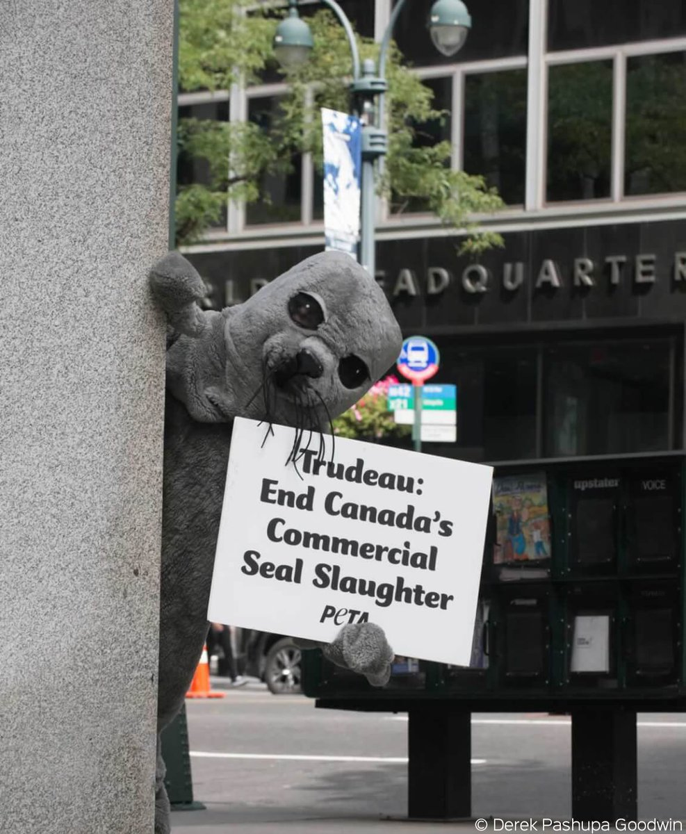Stop this, @JustinTrudeau! &quot;Seal&quot; trails #Canada&#39;s PM during #NY visit, urging him to end commercial seal slaughter.  http:// peta.vg/nycsealtrail  &nbsp;  <br>http://pic.twitter.com/J26diifDI7