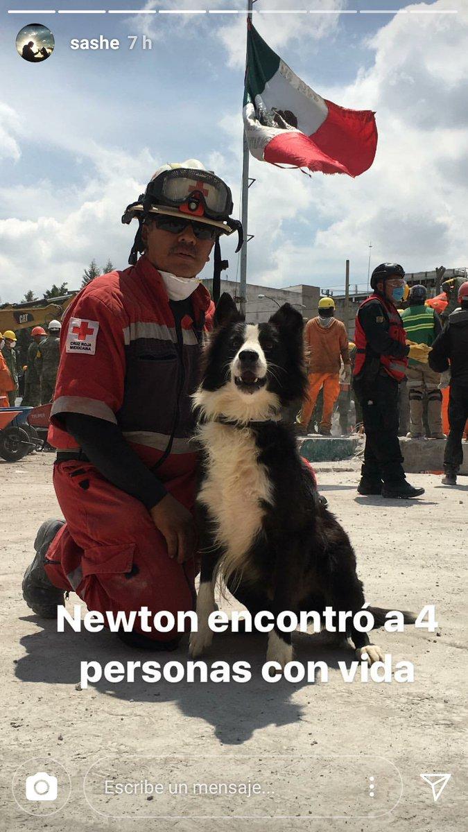 Por si no conocen a Newton. Ayudó a rescatar a 4 personas ❤️ https://t.co/A1RRyFnsLD