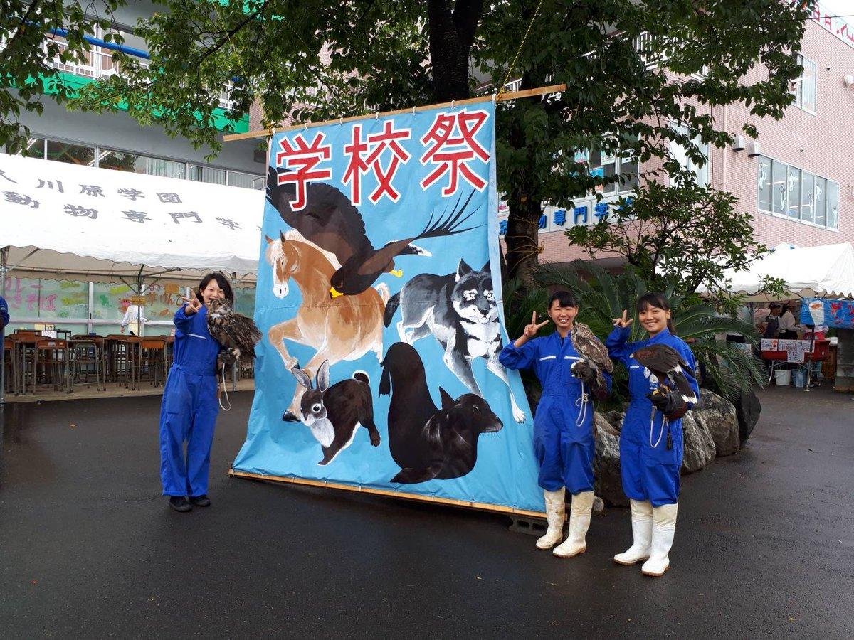 """東京動物専門学校【公式】 בטוויטר: """"#学校祭 2日目スタートです!朝 ..."""