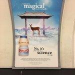 何の関係があるんだよwイギリスのヤクルトの広告が意味不明!