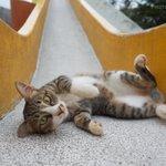 公園のアイドル猫が可愛すぎる可愛すぎるアイドル猫はカンフーの使い手?!