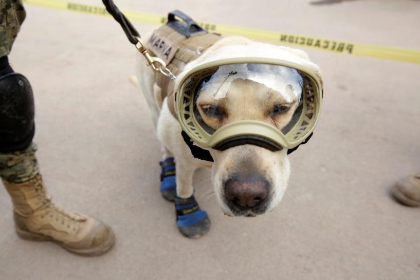 Frida the rescue dog emerges as hero of Mexican earthquake https://t.co/R6ki6p7U8z
