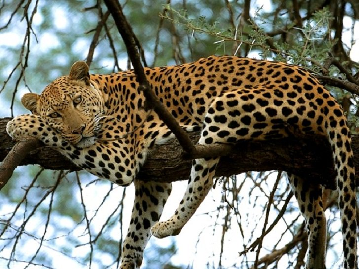 Rain beats the leopard&#39;s skin but it does not wash out the spots - Ghanaian Proverb Good morning #Africa  Photo Courtesy -Pintrest <br>http://pic.twitter.com/ZUfmZP7eaZ