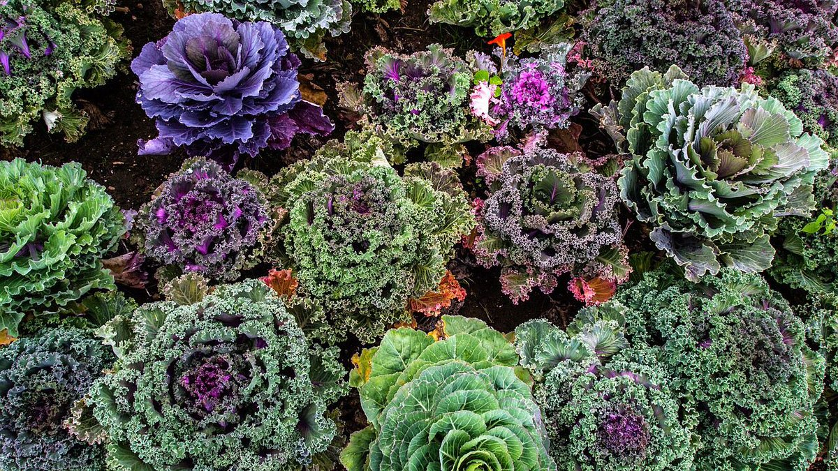 Of 100 #vegetables tested, #kale ranked highest in lutein, important for eye health.<br>http://pic.twitter.com/BpMRWVQfMF