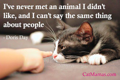 We all have our days (or months) when #animals are a lot easier to get along with than people! #loveanimals #cats<br>http://pic.twitter.com/swtGhk9Buq