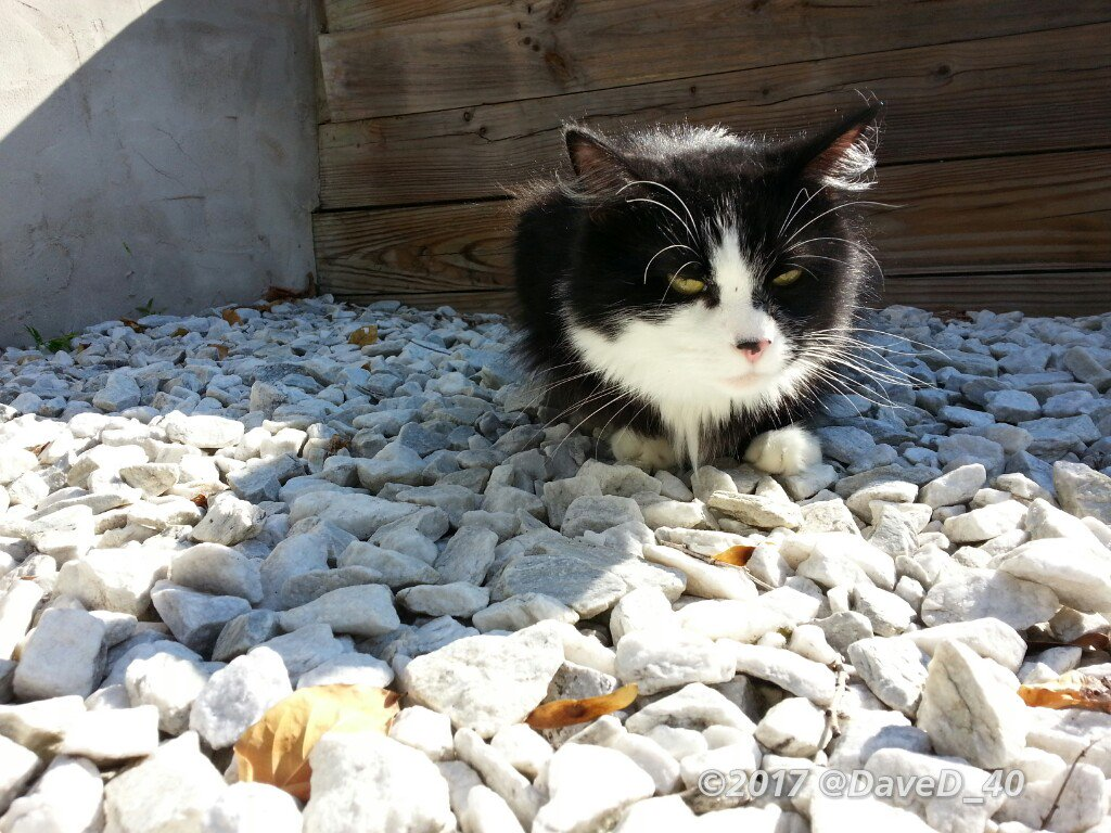 Nina says &quot;Good Morning Twitterworld! I&#39;m soaking up some Sun! Hope everyone has a bright and sunny #Caturday today!&quot;  #PURRS4Otto<br>http://pic.twitter.com/rlWt0SwM3b