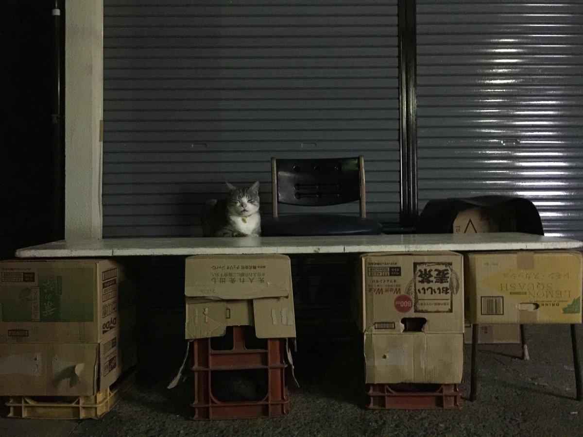 夜ランニングしてたらさ…  猫が露店開いてたんだけど、幻だったのかな…?  猫好きになり過ぎて頭おかしくなったのかと思ったわ