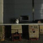 夜ランニングしてたらさ…猫が露店開いてたんだけど、幻だったのかな…?猫好きになり過ぎて頭おかしくなっ…