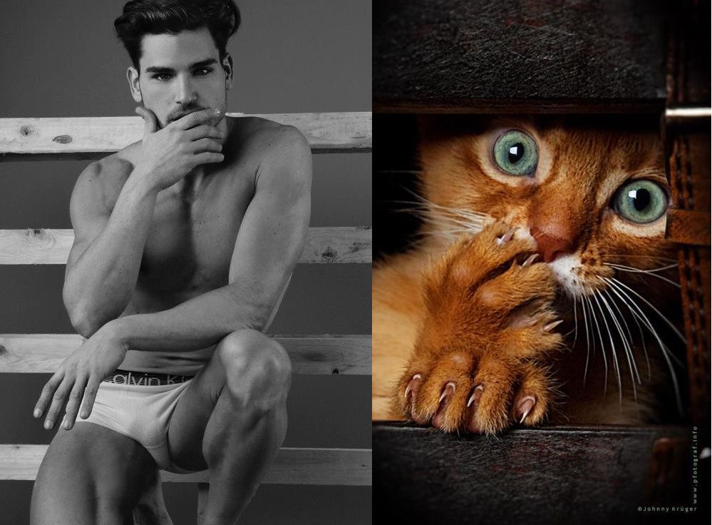 Всех прикольных, прикольная картинка мужик с котом