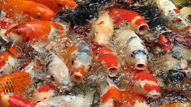 Рецепт вкусной рыбы в духовке