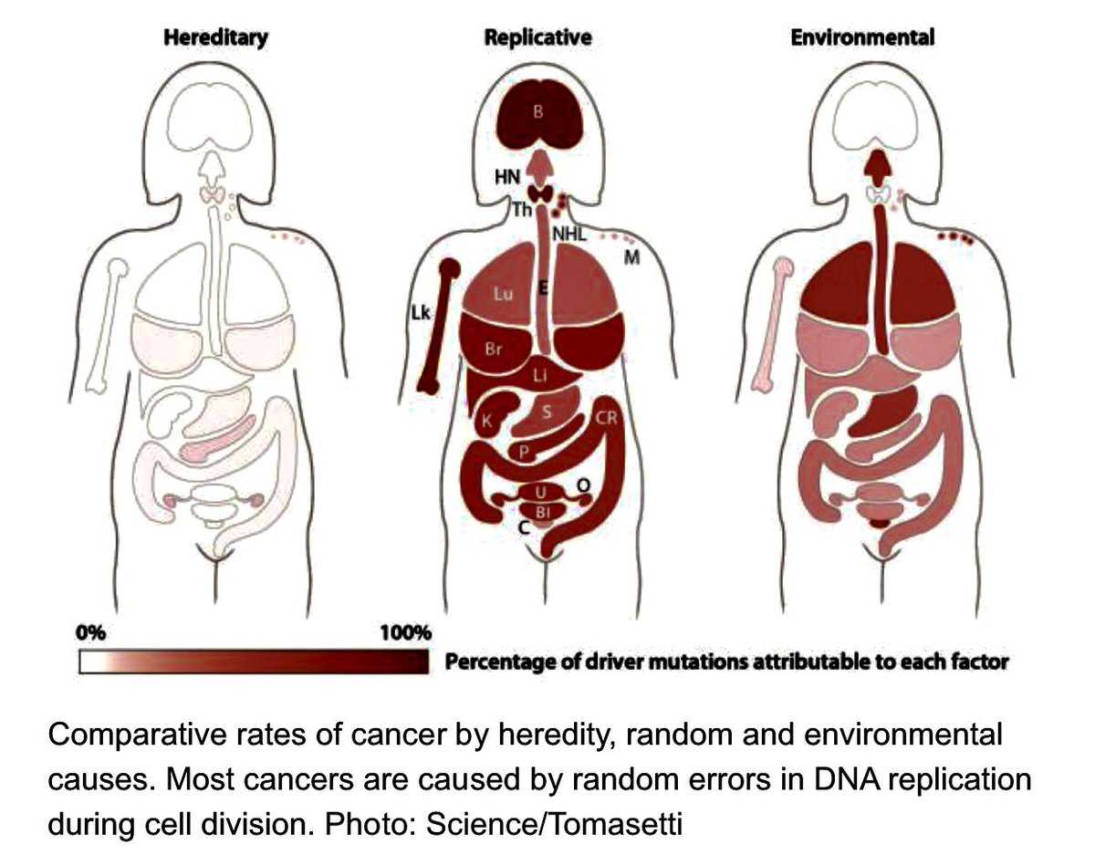 67% of All #Cancers Are Caused by #DNA Replication Errors-How #Genomics Changes Everything#science #pm101 #understandDNA #genetics #NRFE<br>http://pic.twitter.com/CzOBFJQGJb