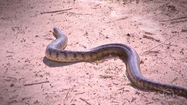 Ribeirinho cria 'galinheiro à prova de sucuri' pra época da cheia no Pantanal: https://t.co/riLkrjByvB 🐍