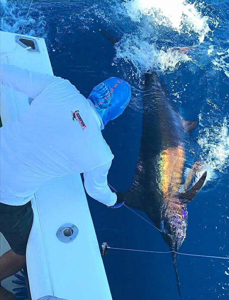 East Cape, MX - El Regalo released a Blue Marlin.
