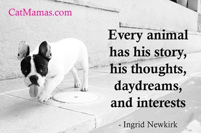I love to wonder about the secret inner lives of #pets. Do you? #loveanimals #cats #dogs<br>http://pic.twitter.com/q99FOll5Ro