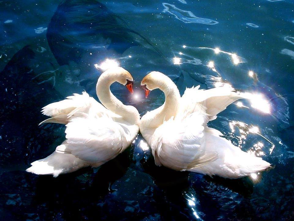 You love someone because they sing a song only your heart can understand~ L.J. Smith  #lovequotes #truelove #soulmates #soulmateblog<br>http://pic.twitter.com/3WWBBV8PR5