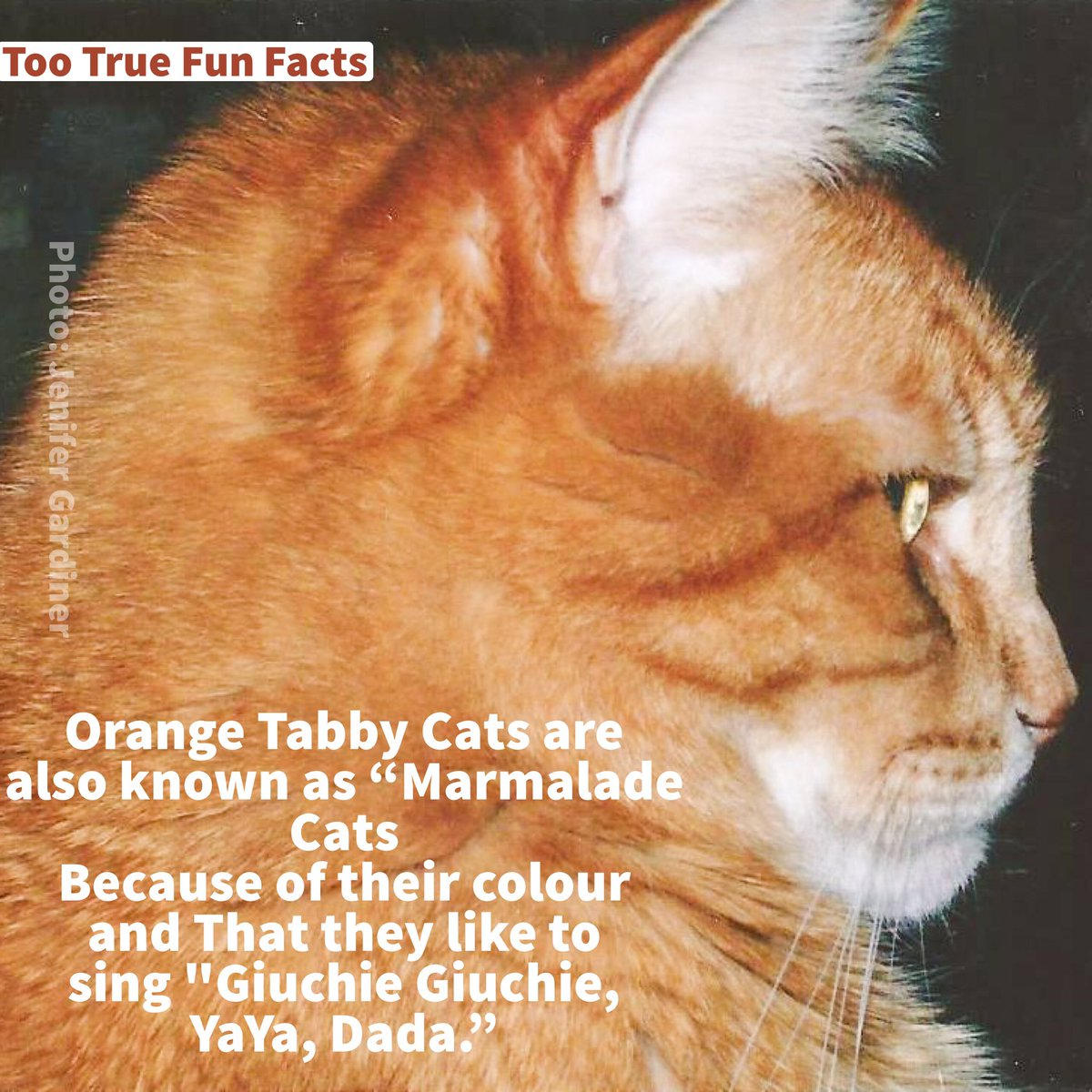 Caturday Fun Fact. #Caturday #cats #cat #animal #animals #animalkingdom #SONGS #song #comedy #funny #meme #memes #parody #satire #lol #lols<br>http://pic.twitter.com/0NoXpODdZW
