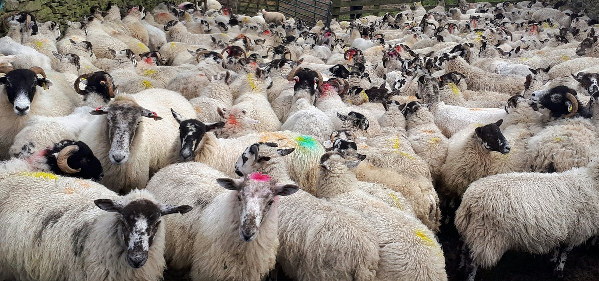 All the coloured marks mean something and if you know what those things are you&#39;re a better man than me #sheep365 <br>http://pic.twitter.com/a1ylaQi2XB