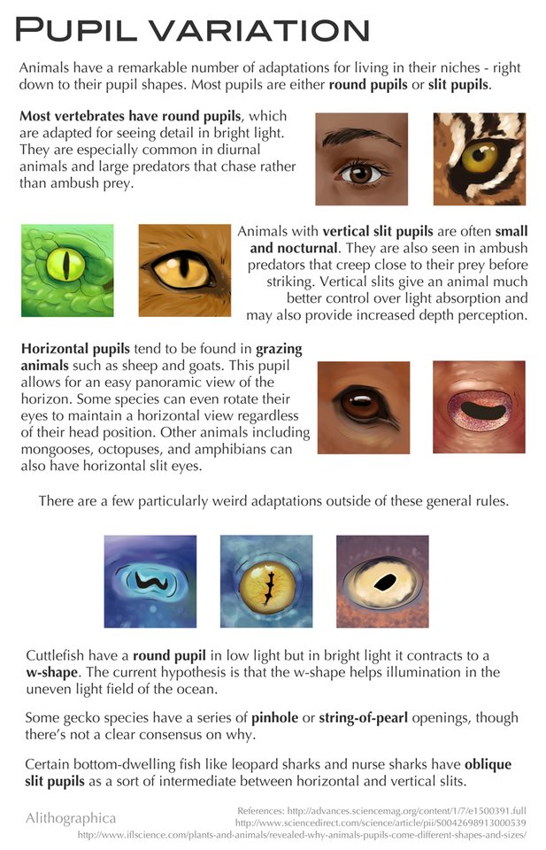 The more you know!   #pupils #eyes #sight #evolution #biology<br>http://pic.twitter.com/KZs1p6NV4v