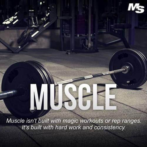 Muscle building #bodybuilding #bodybuildingmotivation #motivation <br>http://pic.twitter.com/cnZ2IfYGub