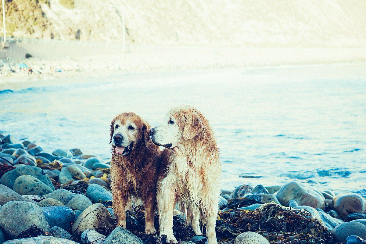 Friendship - Getting wet even if you don&#39;t want to! #dog #friend <br>http://pic.twitter.com/sB8f8gKuXv