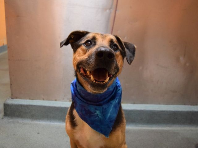 ROSCOE IS SAFE TKS 2  http://www. eskiesonline.com/entry_page.htm  &nbsp;   HELP RESCUE PLS MANY WAIT #NYC ANIMAL CARE CENTER INHUMANELY KILLS PETS DAILY <br>http://pic.twitter.com/fDn01h4Zi0