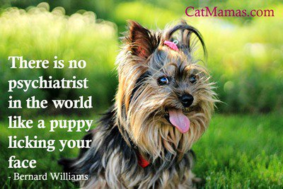 Who needs therapy when you have a wonderful #pet? Doesn&#39;t matter what kind of #animal - they add such joy! <br>http://pic.twitter.com/m3RfqFf2U3