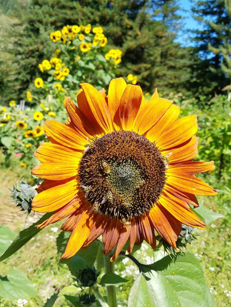 ALL of da buzzies! #FlowerPower <br>http://pic.twitter.com/YRJGEUVAJP