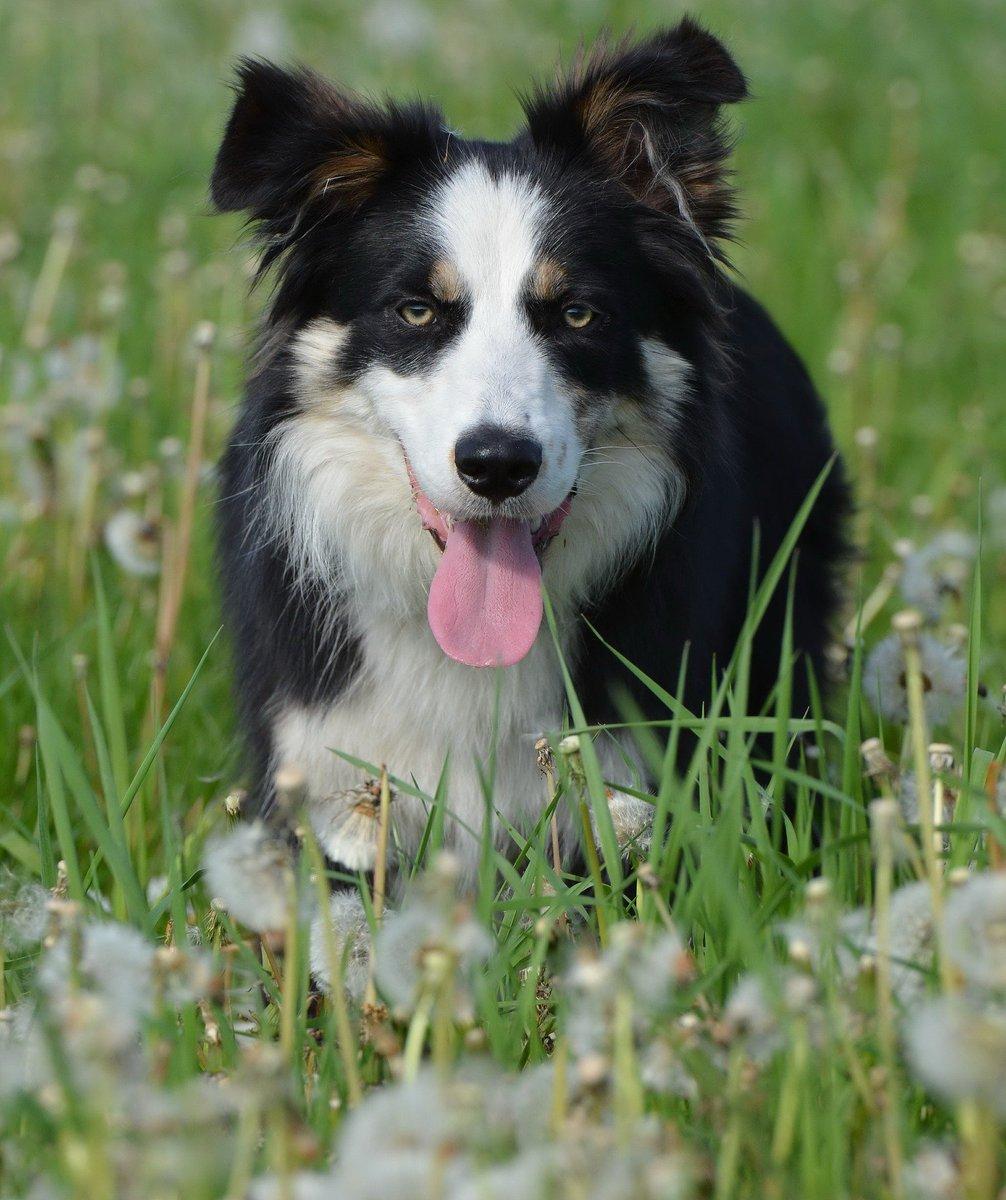 Let&#39;s blow the dandelion! #dog #friend <br>http://pic.twitter.com/h3FlVyTbl8