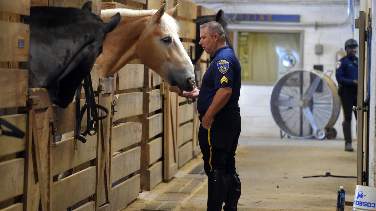 Meet the massive draft #horses of the Baltimore Mounted Unit—all rescues or donated!  http://www. baltimoresun.com/news/maryland/ baltimore-city/bs-md-ci-kelly-column-horse-20170918-story.html &nbsp; …  #adoptdontshop #horserescue<br>http://pic.twitter.com/sP8Vh65lva