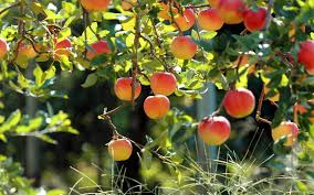 Apples in the fall... and boy did they:  http:// bit.ly/2xt7G77  &nbsp;   #podernfamily #podcast #fall #food #fresh #cooking #cider #fun<br>http://pic.twitter.com/GIjKZtZy9B