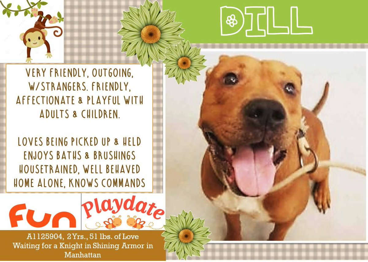 POOR DILL IS DEAD LOVED BEING HELD SUFFERED PAINFUL AGONY WAITED 4 HIS HUMAN 2 THE END #NYC ANIMAL CARE CENTER INHUMANELY KILLS PETS DAILY <br>http://pic.twitter.com/tlhW4UpCmS