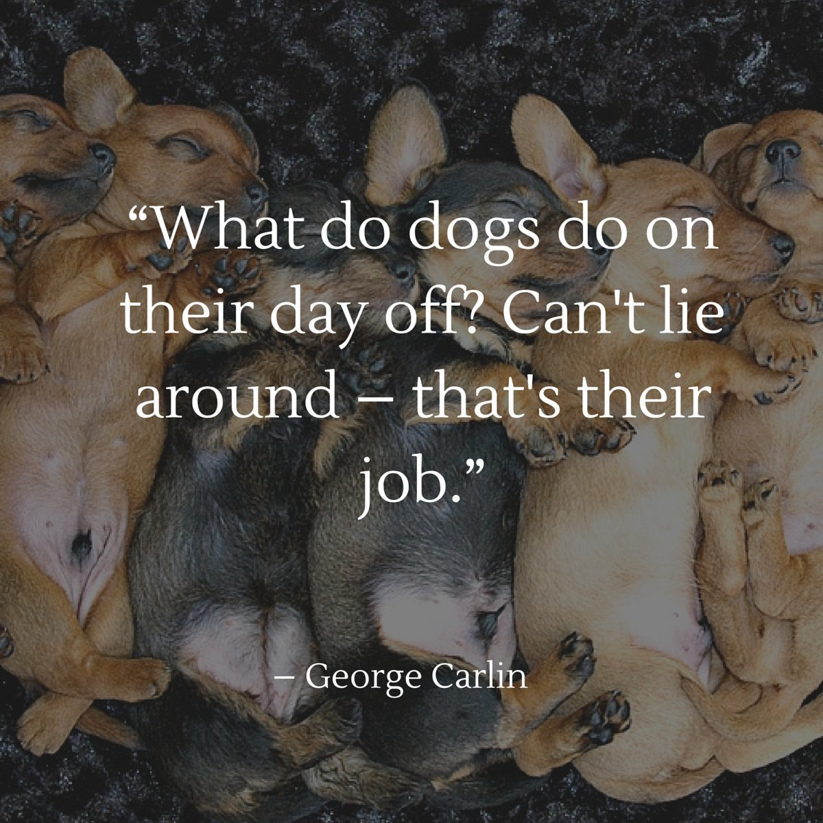 What do dogs do on their day off? They can&#39;t lie around, that&#39;s their job! -George Carlin #quote #doglover <br>http://pic.twitter.com/aUup0IIAAt