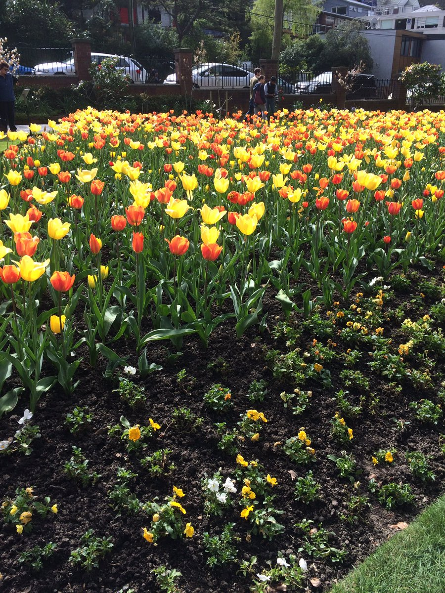Study In New Zealand On Twitter Enjoying The Colors Of Spring