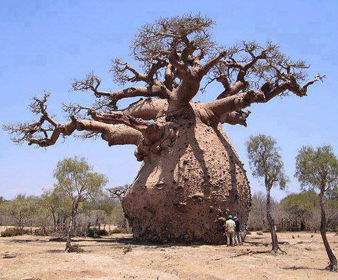 Wisdom is like a baobab tree; no one individual can embrace it. ~ Akan proverb  Good Morning #Africa  (Photo courtesy - Pintrest) <br>http://pic.twitter.com/xNgttpLy7O