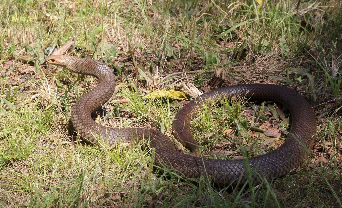 snakecatcher twitter search