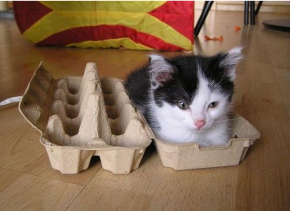 Obligatory Twitter #Cat Slash #Food Picture Number Fifty Nine  #grumpy #haiku <br>http://pic.twitter.com/3lqdR6Erwh