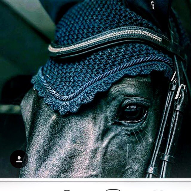 Shoutout!!! #follo #following Love these photos of @DayGee @MandyDay123 of Burt modelling our #browband #247dressage #TheDressageHour <br>http://pic.twitter.com/maFaiezoP4