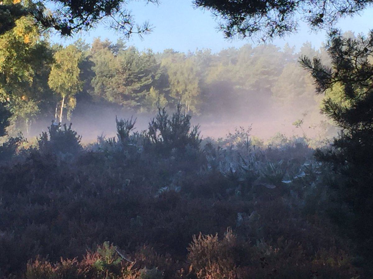 Mist and sunshine on #HorsellCommon , #Woking, #Surrey photographed by Lis <br>http://pic.twitter.com/j8SxAZzumJ