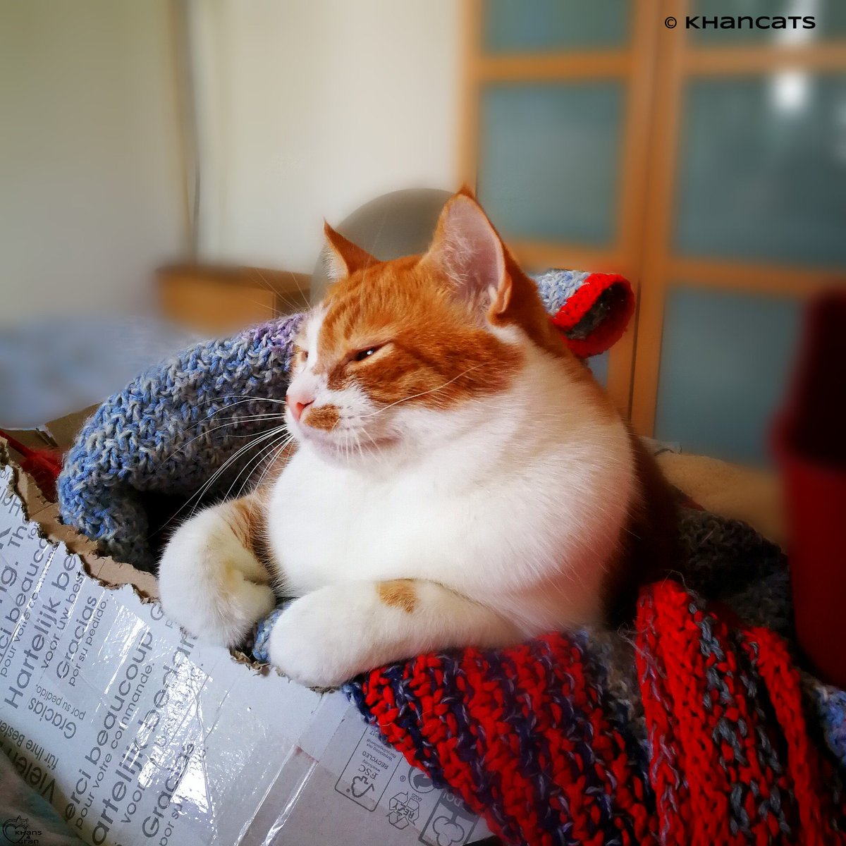 i need a day between #Caturday &amp; #catboxsunday ...&amp; lots of covfefee #SundayMorning #CatsOfTwitter @mirrr_i_Am @MiloCarrotCat @3coolkatz<br>http://pic.twitter.com/kgu3ppgDGr