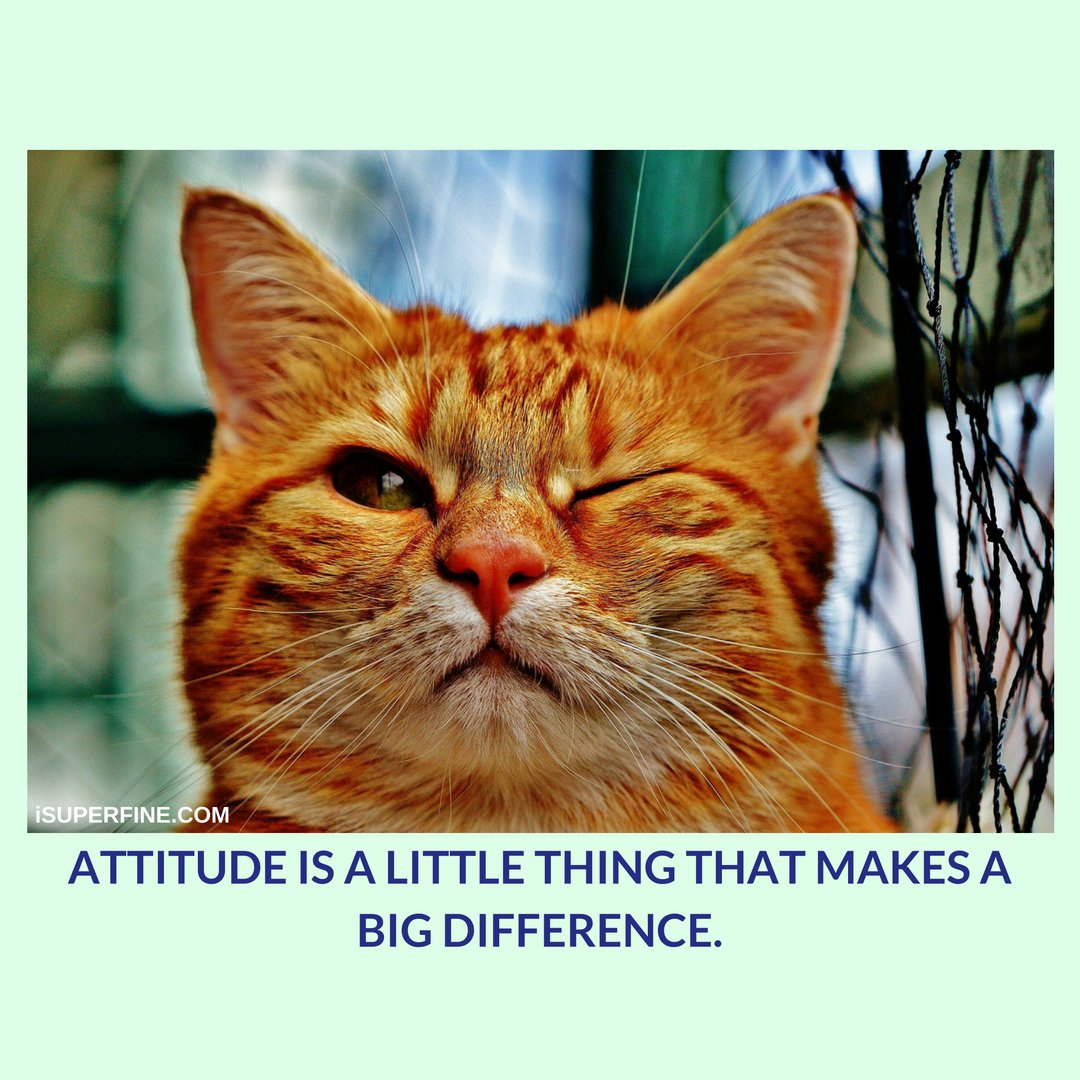 ATTITUDE IS A LITTLE THING THAT MAKES A BIG DIFFERENCE. #attitude #Mindset #LOVE_YOURSELF #sundaymotivation<br>http://pic.twitter.com/Rh3JB8SD8m